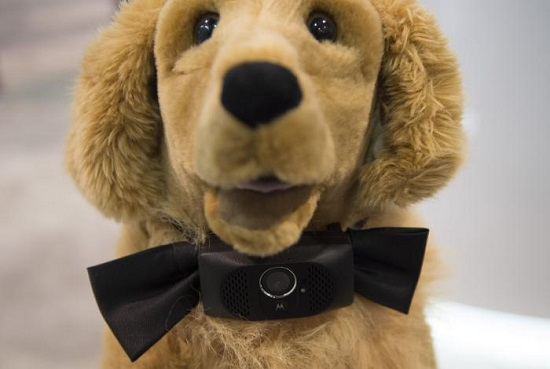 Bow-WOW-Smart-collar